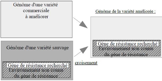 OGM, variété nouvelle naturelle, gène inconnu