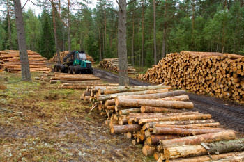 électricité renouvelable énergies renouvelables, bois biomasse centrale Gardanne