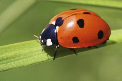 OGM Bt épargnent les insectes utiles en réduisant les insecticides
