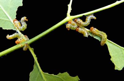 pesticides pour combattre les pestes et ravageurs