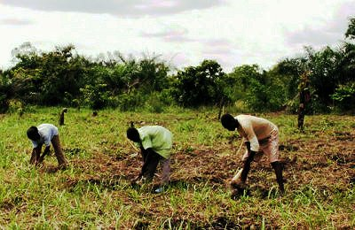 agriculture biologique et traditionnelle