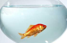 pyrèthre et vie aquatique